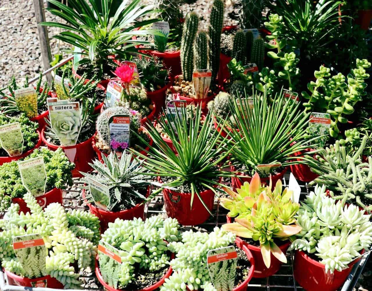 Colourful Landscaping Plants